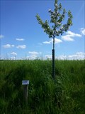 Image for Dedicated Trees-Appletree 'Rote Sternrenette' - 96352 Effelter/Germany/BY
