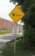 Image for Duck & Turtle Crossing - Hammond, Indiana
