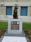 Image for Mattie - Windsor Locks, CT