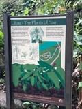 Image for La'au - The Plants of 'Iao - Maui, Hawaii