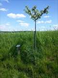Image for Dedicated Trees-Appletree 'Himbacher Grüner' - 96352 Effelter/Germany/BY