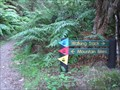 Image for Whirinaki Forest Mountain Bike Track. near Minginui. New Zealand.
