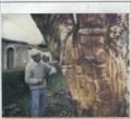 Image for A árvore da Fanadia-Portugal