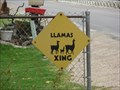 Image for Llama Crossing Ahead