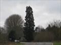 Image for Sequoiadendron giganteum - Syresham, Northamptonshire, UK