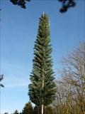Image for O2 Fir Tree Mast - Old Warden, Bedfordshire, UK