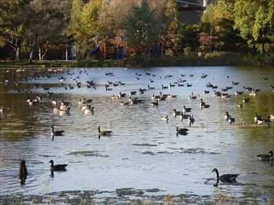 Le lac-Henri et les bernaches a deux pas du Panneau.  Lake-Henri and geese two steps Panel.