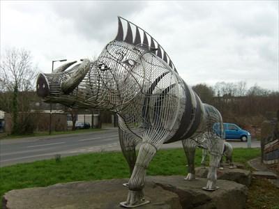 Wild Boar - Ammanford, Carmarthenshire, Wales.