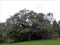 Image for Hanging Tree - Coldspring, TX