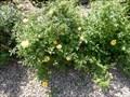 Image for Texas Lions Centennial Service Rose Garden - San Antonio, TX USA