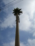 Image for Sierra Highway Palm Tree - Canyon Country, CA