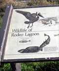 Image for Wildlife of Rodeo Lagoon, California