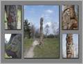 Image for Nature Totem - Bruges - belgium