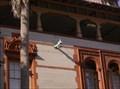Image for Flagler College Gargoyles