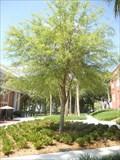 "Image for Tom Cornelius ""TC"" Lane, Jr. - DeLand, FL"