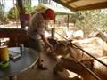 Image for Feed the Donkeys, Donkey Sanctuary, Aruba