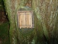 Image for Bamboo Fairy Door - Portpatrick, Scotland, UK
