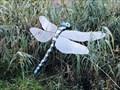 Image for Libelle in der Wunderwelt Wasser Malente - Schleswig-Holstein, Germany