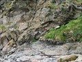 Image for Niarbyl Fault - Niarbyl Beach, Isle of Man