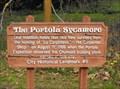 Image for The Portolá Sycamore - Carpinteria, California