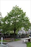 Image for Schubert-Linde - Klosterneuburg, Austria