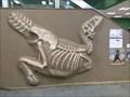 Image for Geologisch-Paläontologisches Museum - Hamburg, Deutschland