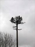 Image for Cell Tree - Atlanta, GA