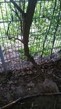 Image for Tree eats fence - Bonn - NRW - Germany