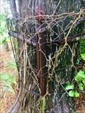 Image for Tree Eating Wrought-Iron Fence - Saint Jo, TX