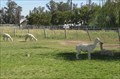 Image for Lilly of the Valley Alpacas - Modesto, CA