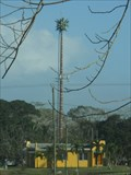 Image for Palm Tree at national fairgrounds -  Belmopan, Belize