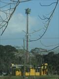 Image for Palm Tree at national fairgrounds -  Belmopan, Belize