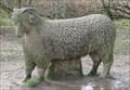 Image for Mystery Ram - Birstall, UK