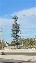 Image for Hesperian Blvd Pine Tree - Hayward, CA