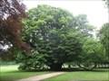 Image for Tilleul du parc de Cheverny - France