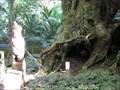 Image for Taketakerau Burial Tree.  near Opotiki. New Zealand.