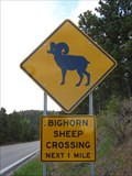 Image for Bighorn Sheep Crossing - Near Hill City, SD