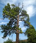 Image for The Hanging Tree - Clancy, MT