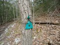 Image for Trail Marker being devoured - Rocky Gap State Park- Flintstone, Maryland