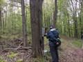 Image for Bear Creak Park FLT register (Catteraugus County)