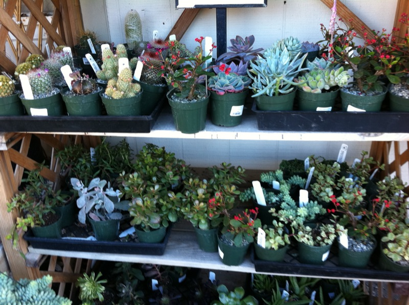 Summer Winds Nursery Succulents San Jose Ca