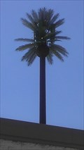 Image for Talking Palm Tree - Speedway & Columbus - Tucson, AZ