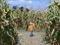 Image for The Amazing Maize Maze - Diehl's Orchard & Cider Mill - Holly, MI