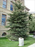 Image for Gift of Life Tree - Coalville, Utah
