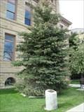 Image for Gift of Life Tree - Coalville, Utah