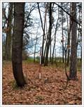 Image for TB 2416-41 Na obecním lese, CZ