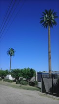 Image for Talking Palm Trees - Baseline & 16th - Phoenix, AZ