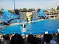 Image for Killer Whale At Sea World  -  San Diego, CA