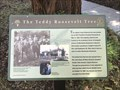Image for The Teddy Roosevelt Tree - Los Gatos, CA