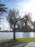 Image for Sister City Tree  -  Orlando, FL